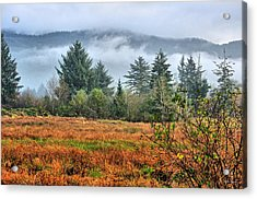 Wetlands In The Fall Acrylic Print