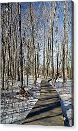 Wetlands In Winter Acrylic Print