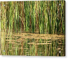 Acrylic Print featuring the photograph Wetlands by Laurel Powell