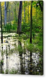 Wetlands Acrylic Print by Frozen in Time Fine Art Photography