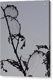 Wetting The Spiderweb. Acrylic Print