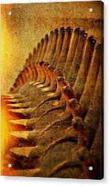 Whale Bone Acrylic Print by See My  Photos