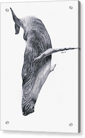 Acrylic Print featuring the drawing Whale by Lucy D