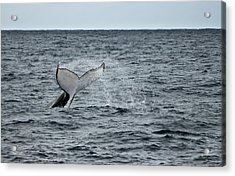 Acrylic Print featuring the photograph Whale Of A Time by Miroslava Jurcik