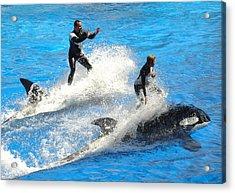 Whale Racing Acrylic Print by David Nicholls