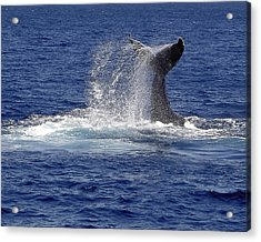 Acrylic Print featuring the photograph Whale Tale Splash by Penny Lisowski