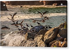 Whalers Cove Birds Acrylic Print