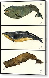 Whales Compilation 2 Acrylic Print by Juan  Bosco