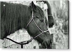 What A Horse Acrylic Print