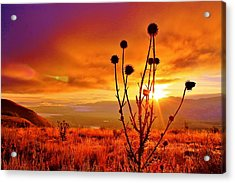 What A Morning Acrylic Print