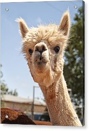 What Are You Lookin' At Acrylic Print by Melany Sarafis