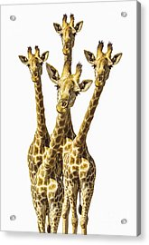 What Are You Looking At? Acrylic Print by Diane Diederich