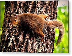 What Are You Looking At Acrylic Print by Tara Potts