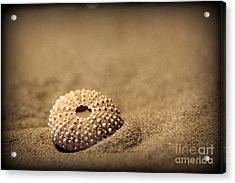 What Becomes Sand Acrylic Print