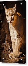 What Big Paws Acrylic Print
