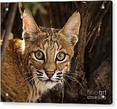What Did You Say Acrylic Print by Carl Jackson