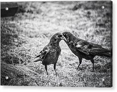 What The Raven Said Acrylic Print