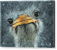Whatcha Looking At? Acrylic Print by Patricia Pasbrig