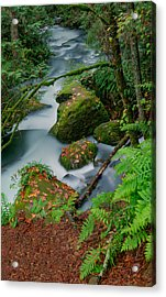 Whatcom Falls 1 Acrylic Print