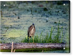 Acrylic Print featuring the photograph Whatcou Lookin' At? by David Porteus