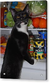 Acrylic Print featuring the photograph What's For Dinner? by Ramona Whiteaker