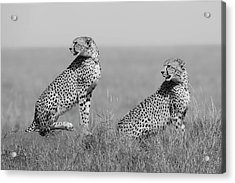 What's Going On Here Around? Acrylic Print by Marco Pozzi