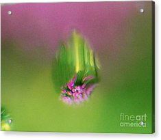 Whats In A Raindrop 2 Acrylic Print by Judy Via-Wolff