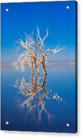 Whats Left Acrylic Print by Scott Campbell