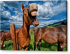 What's So Funny Acrylic Print by Cat Connor