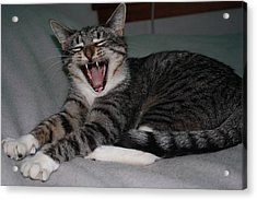 What's So Funny Acrylic Print by William Mathein