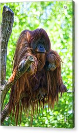 What's Up Acrylic Print by Heiko Koehrer-Wagner