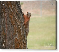 What's Up? Acrylic Print by Margaret McDermott