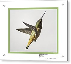 What's Up? Acrylic Print by Mike Herdering
