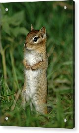 Acrylic Print featuring the photograph Whats Up by Sandra Updyke