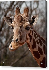 What's Ya Talking About? Acrylic Print by Steven Reed