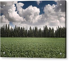 Wheat Field And Clouds Acrylic Print