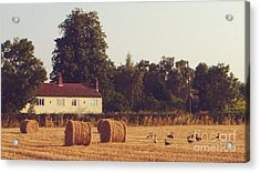 Wheat Field And Geese At Harvest Acrylic Print