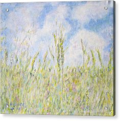 Wheat Field And Wildflowers Acrylic Print