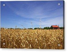 Wheat Field II Acrylic Print