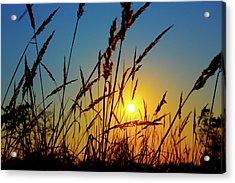 Wheat Field In Sunrise Acrylic Print by Wladimir Bulgar