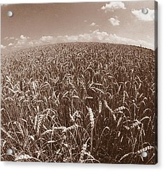 Wheat Fields Forever Acrylic Print