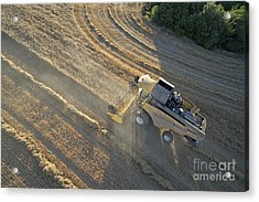 Wheat Harvest In Provence Acrylic Print by Sami Sarkis