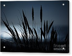 Wheat Stalks On A Dune At Moonlight Acrylic Print