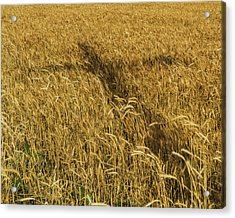 Wheat With Cross  Acrylic Print