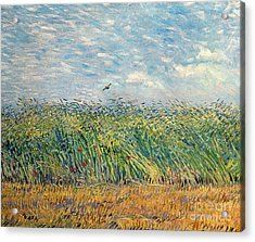 Wheatfield With Lark Acrylic Print by Vincent van Gogh