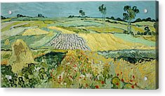Wheatfields Near Auvers-sur-oise Acrylic Print by Vincent van Gogh
