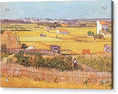 Wheatfields Acrylic Print by Vincent van Gogh