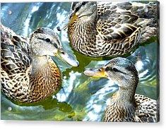 When Duck Bills Meet Acrylic Print by Lesa Fine