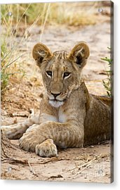 When I Am King Acrylic Print by Chris Scroggins