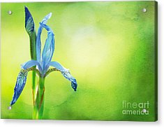 When In Doubt Acrylic Print